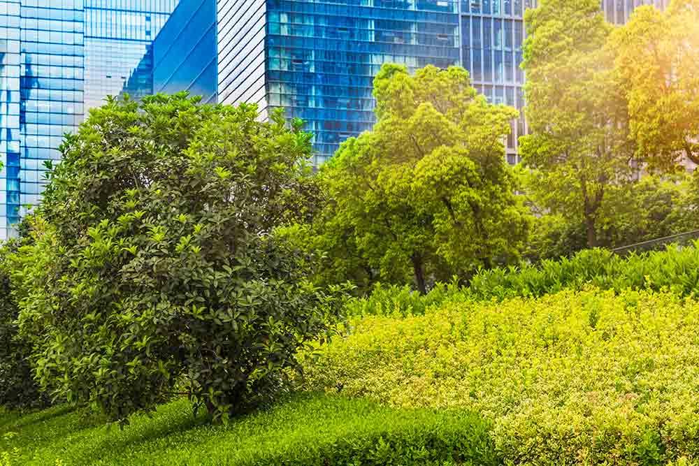 buildings-grasses-1000