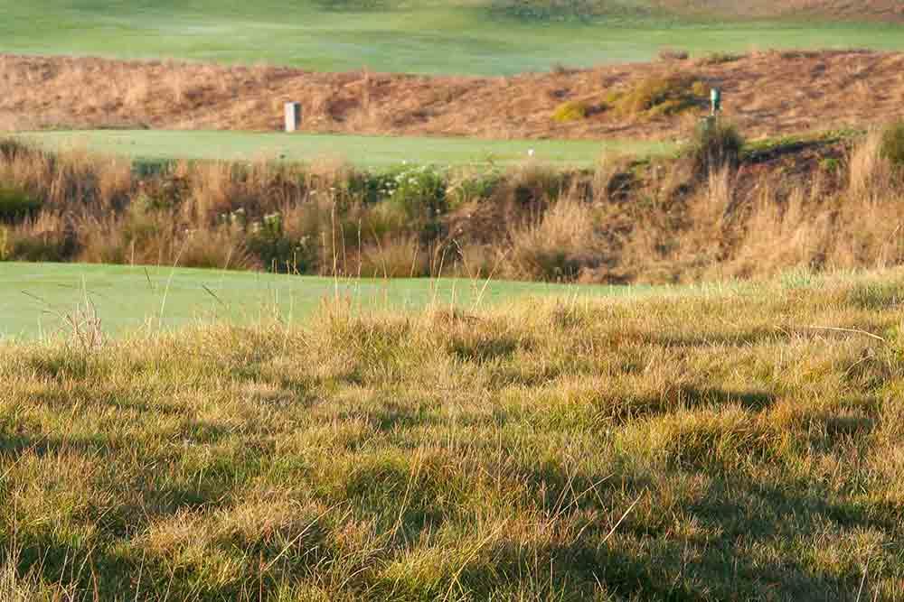 golf-rough-det-1-1000